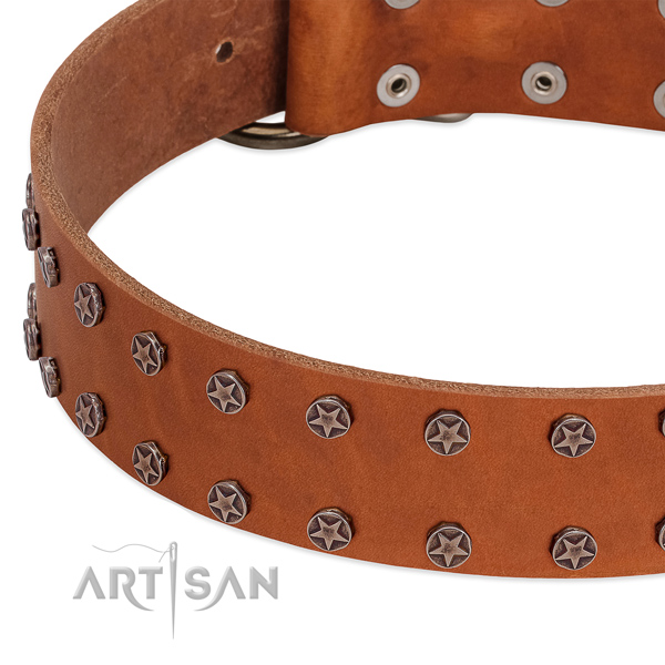 Comfortable leather dog collar for everyday walking