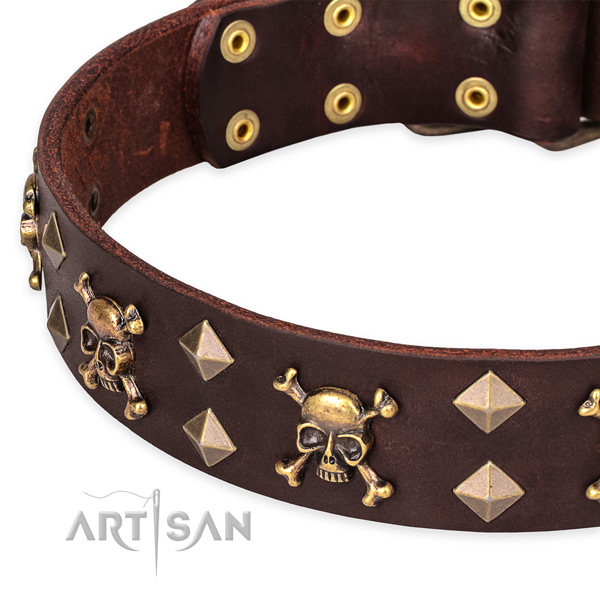 Everyday walking studded dog collar of top quality genuine leather