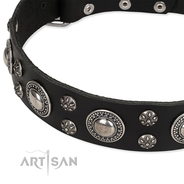 Comfortable wearing embellished dog collar of high quality full grain leather