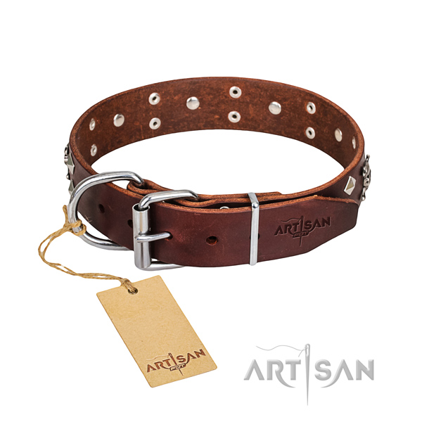 Daily walking dog collar of fine quality leather with studs