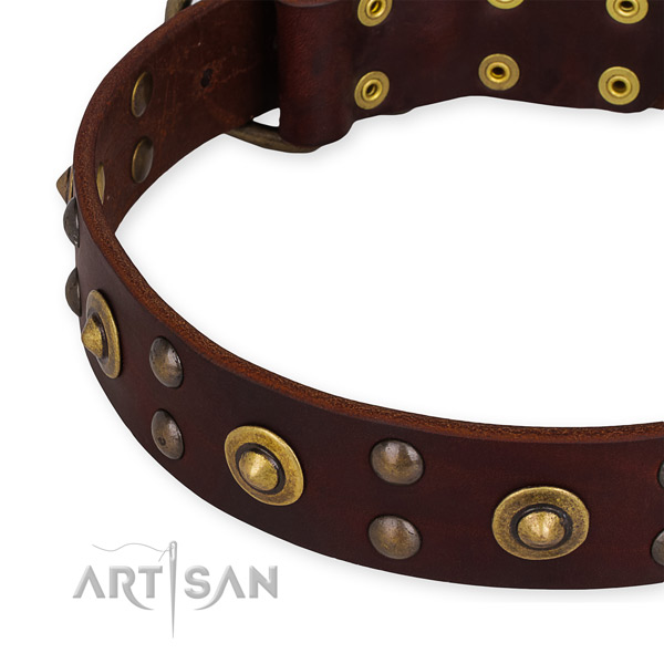 Full grain natural leather collar with strong hardware for your handsome dog
