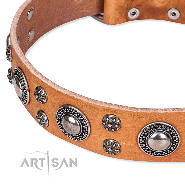 Walking adorned dog collar of strong full grain genuine leather
