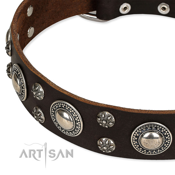 Everyday use studded dog collar of reliable leather