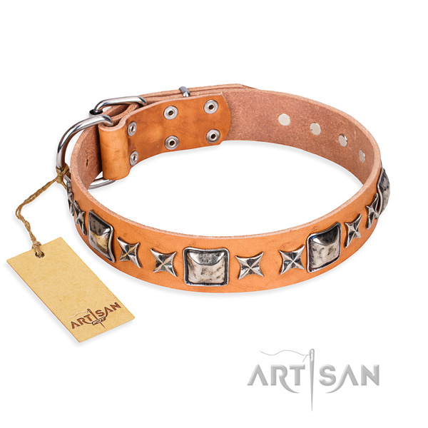 Daily walking dog collar of strong full grain natural leather with embellishments