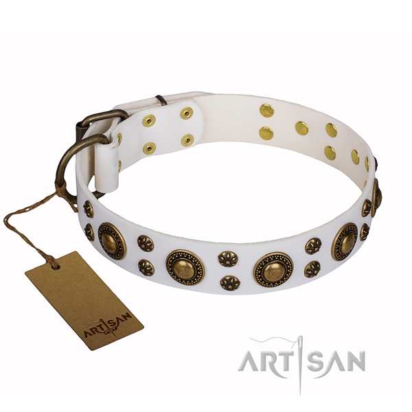Stylish walking dog collar of best quality full grain genuine leather with adornments