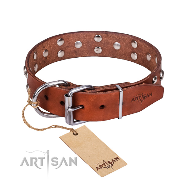 Everyday walking dog collar of best quality full grain leather with adornments