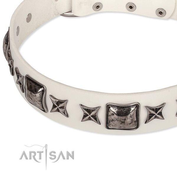 Comfortable wearing studded dog collar of strong full grain leather