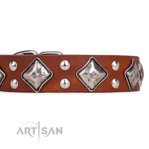 Full grain natural leather dog collar with trendy corrosion proof studs