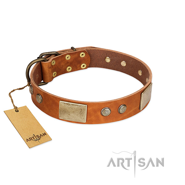 Easy adjustable genuine leather dog collar for stylish walking your four-legged friend