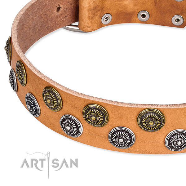 Daily walking adorned dog collar of fine quality natural leather