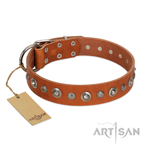 Top notch full grain natural leather dog collar with significant adornments