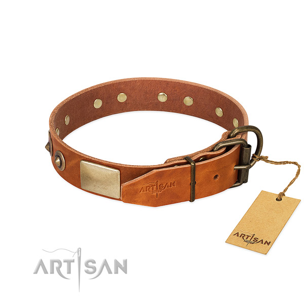 Rust resistant adornments on daily walking dog collar