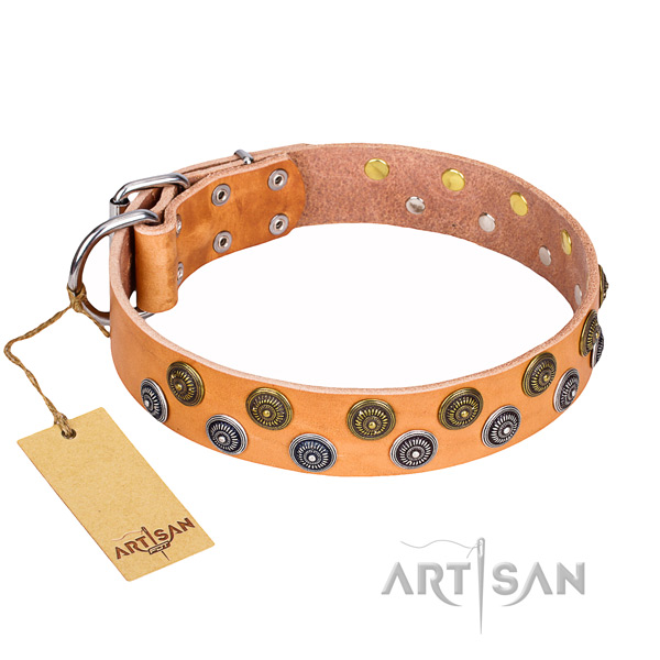 Walking dog collar of best quality full grain natural leather with studs