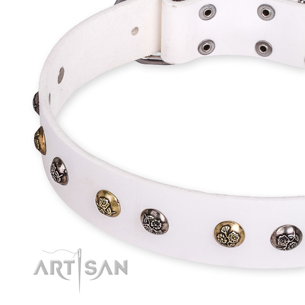 Full grain genuine leather dog collar with significant corrosion proof studs