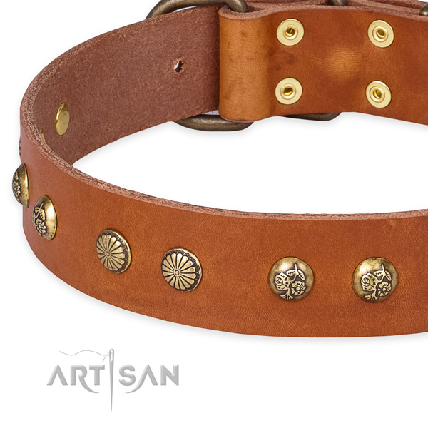 Full grain leather collar with reliable fittings for your lovely canine