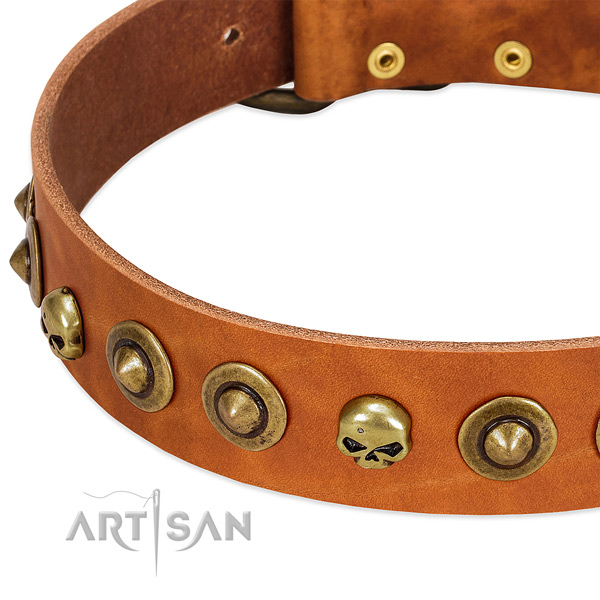 Significant embellishments on leather collar for your doggie
