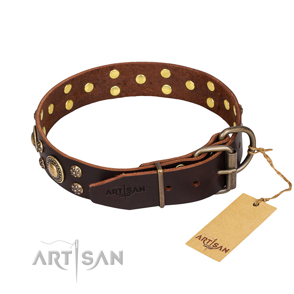 Comfy wearing decorated dog collar of top notch leather