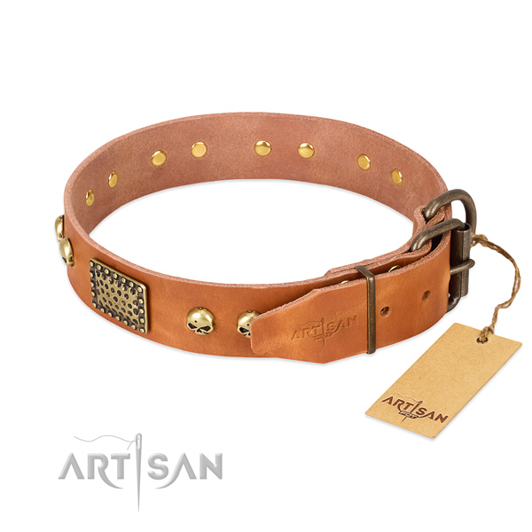 Rust-proof traditional buckle on stylish walking dog collar