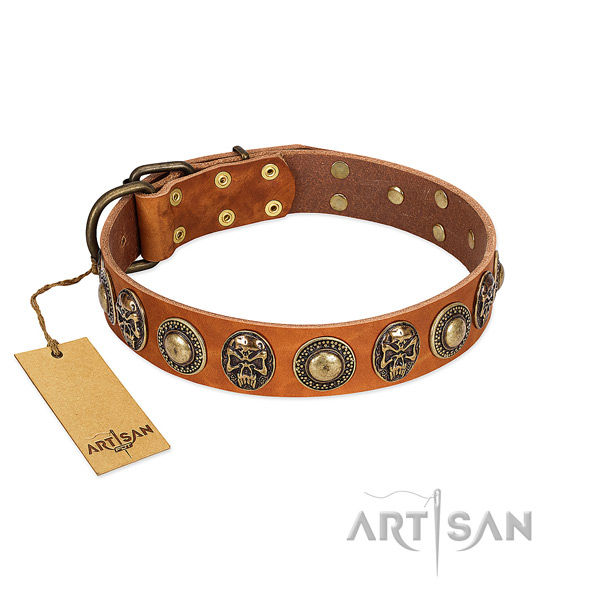 Adjustable full grain leather dog collar for stylish walking your doggie