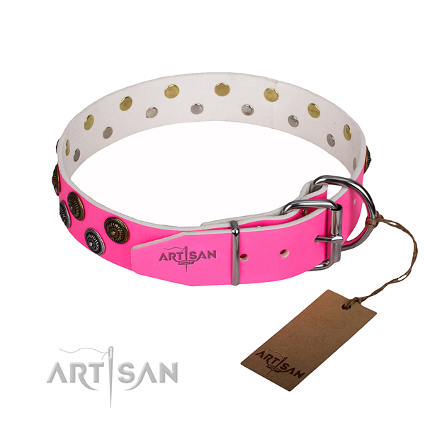 Daily use studded dog collar of high quality full grain genuine leather