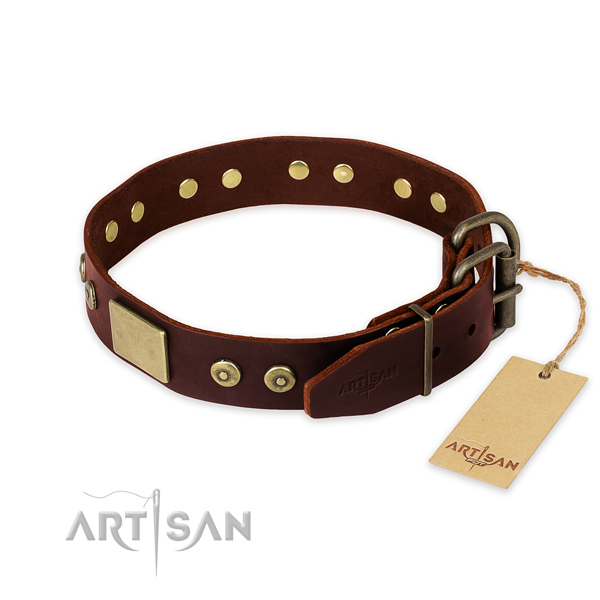 Rust-proof studs on everyday walking dog collar