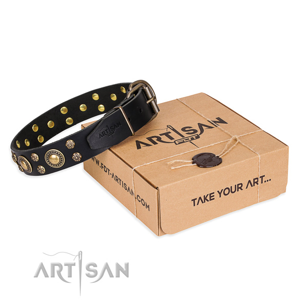 Everyday walking dog collar of top quality leather with decorations