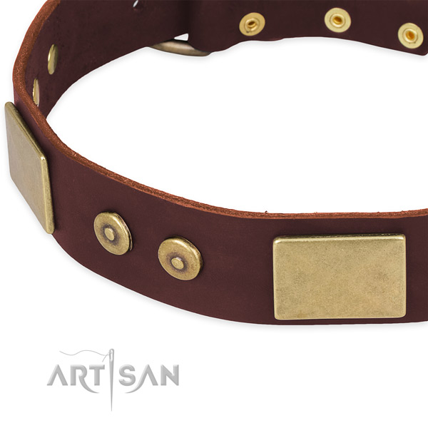 Full grain natural leather dog collar with adornments for stylish walking