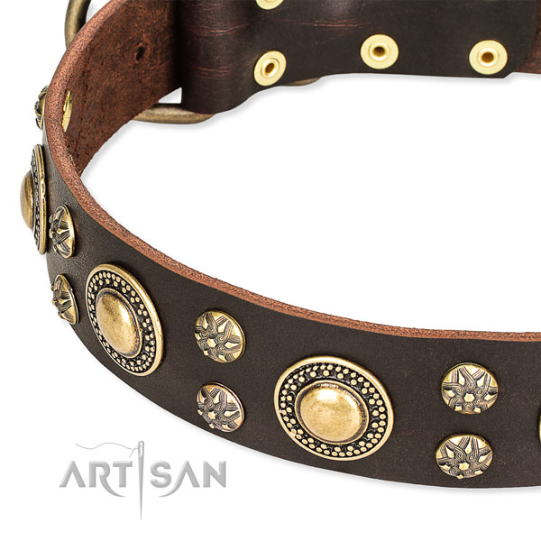 Basic training studded dog collar of strong genuine leather