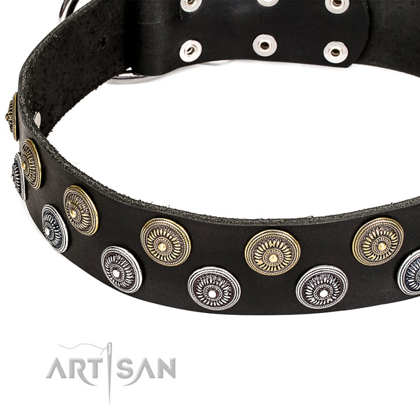 Comfy wearing decorated dog collar of reliable full grain genuine leather