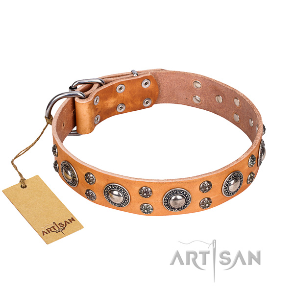 Comfy wearing dog collar of high quality full grain leather with adornments