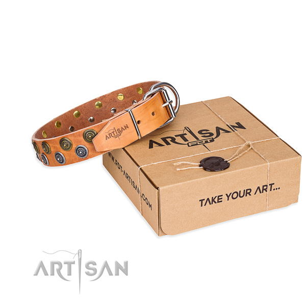 Walking dog collar of quality full grain leather with adornments