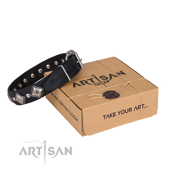 Daily walking dog collar of quality leather with studs