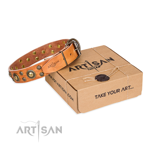Everyday walking dog collar of strong full grain leather with studs