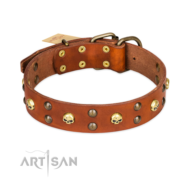 Everyday walking dog collar of fine quality genuine leather with embellishments