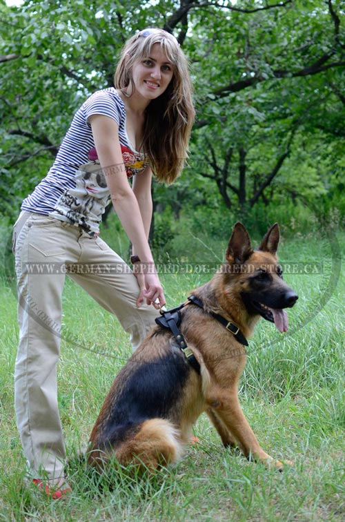 German Shepherd Dog Harness for Moving Comfortable and Freely