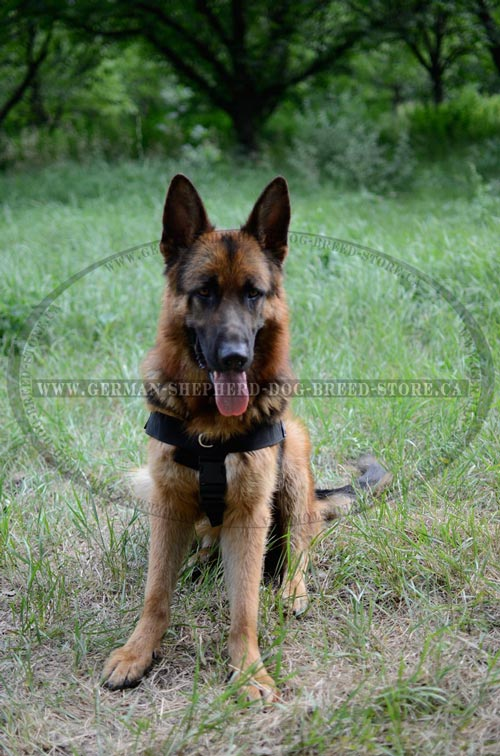 Walking Nylon German Shepherd Harness with Quick Release Buckles