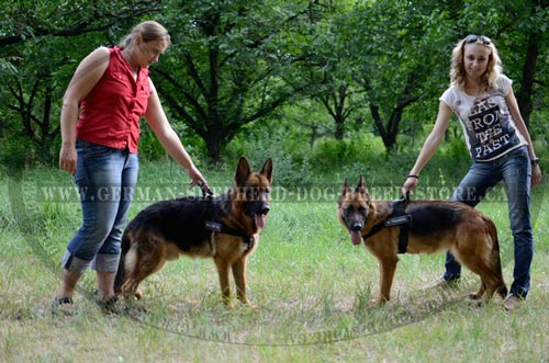 Nylon German Shepherd Harness for Dog Training and Professional Working