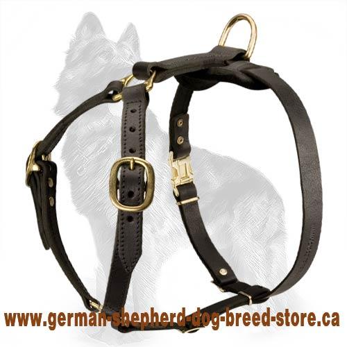 Air Canada Press Release Dog Breed