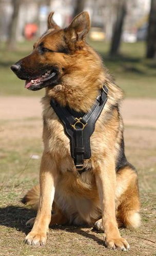 Leather German Shepherd Dog Harness With Brass Fittings  For Everyday Use