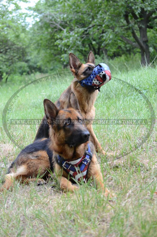American Pride Painted Dog Muzzle and Harness for German Shepherd
