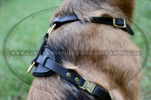 Leather Dog Harness Equipped with Reliable Quick Release Buckle