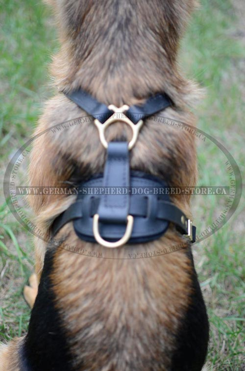 Leather Dog Harness with Strong Massive Brass Ring