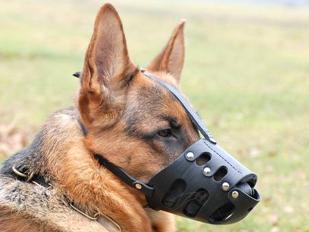 German Shepherd Everyday Leather dog muzzle for walking/training