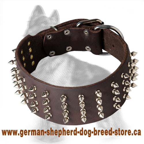 3 inch Leather German Shepherd Collar with 4 Rows Nickel Spikes