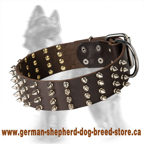 2 inch Wide Leather German Shepherd Collar Spiked in 4 Rows