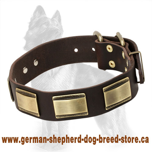 Leather German Shepherd Collar with Carved Brass Pates - Click Image to Close