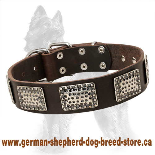 Leather German Shepherd Collar with Unusual Nickel Plates