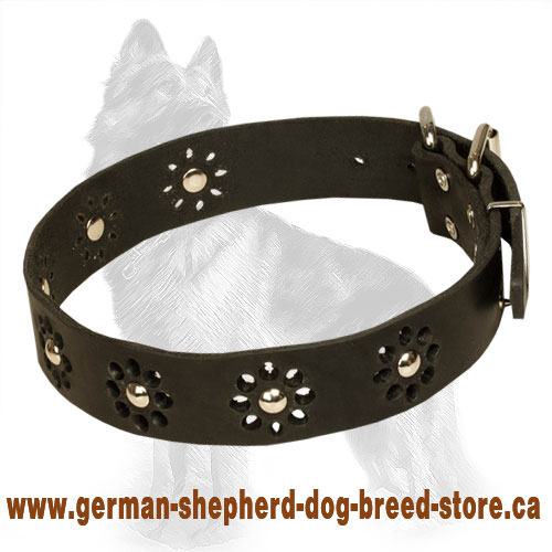 Blooming Leather German Shepherd Collar with Nickel Plated Studs