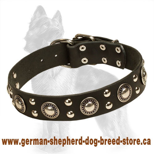 Leather German Shepherd Collar with Nickel Plated Studs and Circles