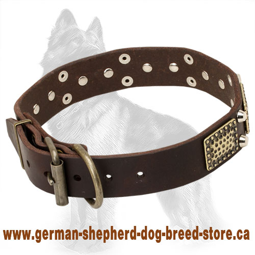 Leather German Shepherd Collar with Brass Plates and Nickel Pyramids